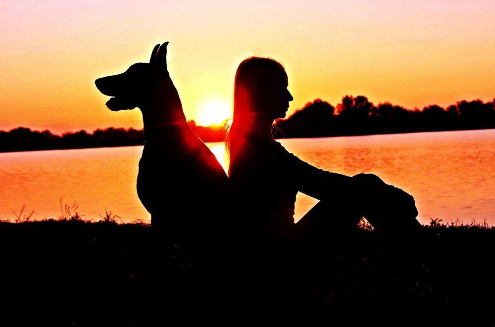 dog woman lake sunset contrast
