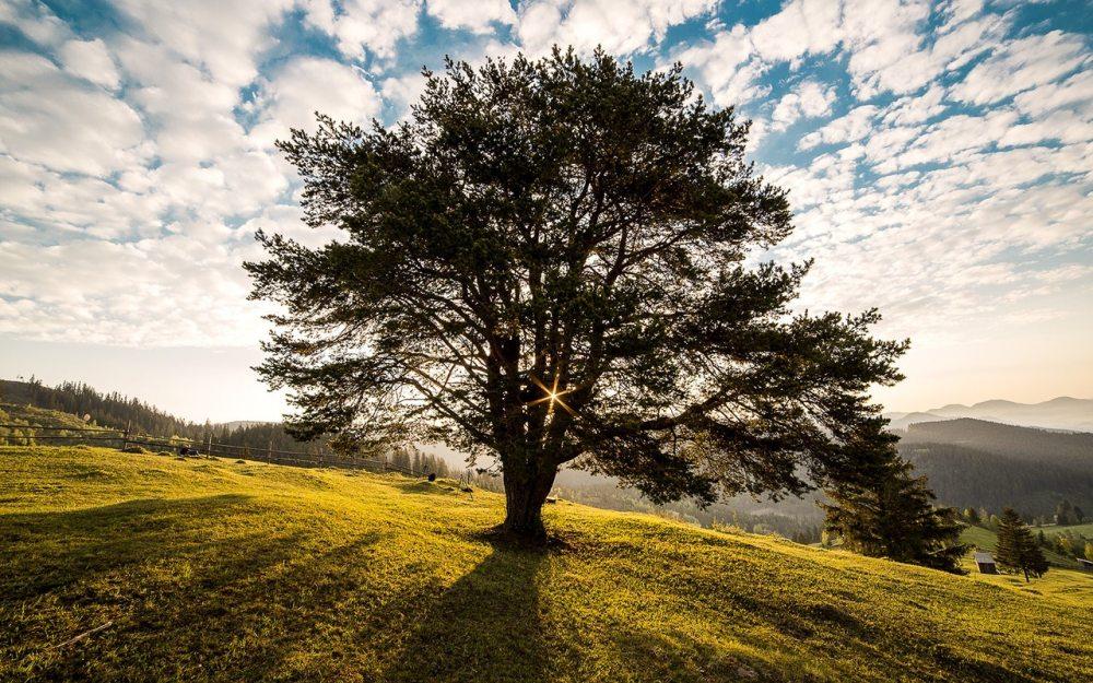 tree sun sky grass hill romania