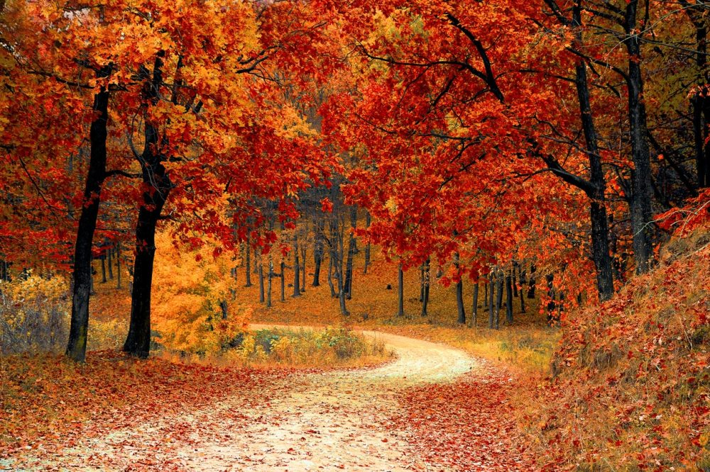 autumn fall leaves trees forest orange yellow foliage pathway